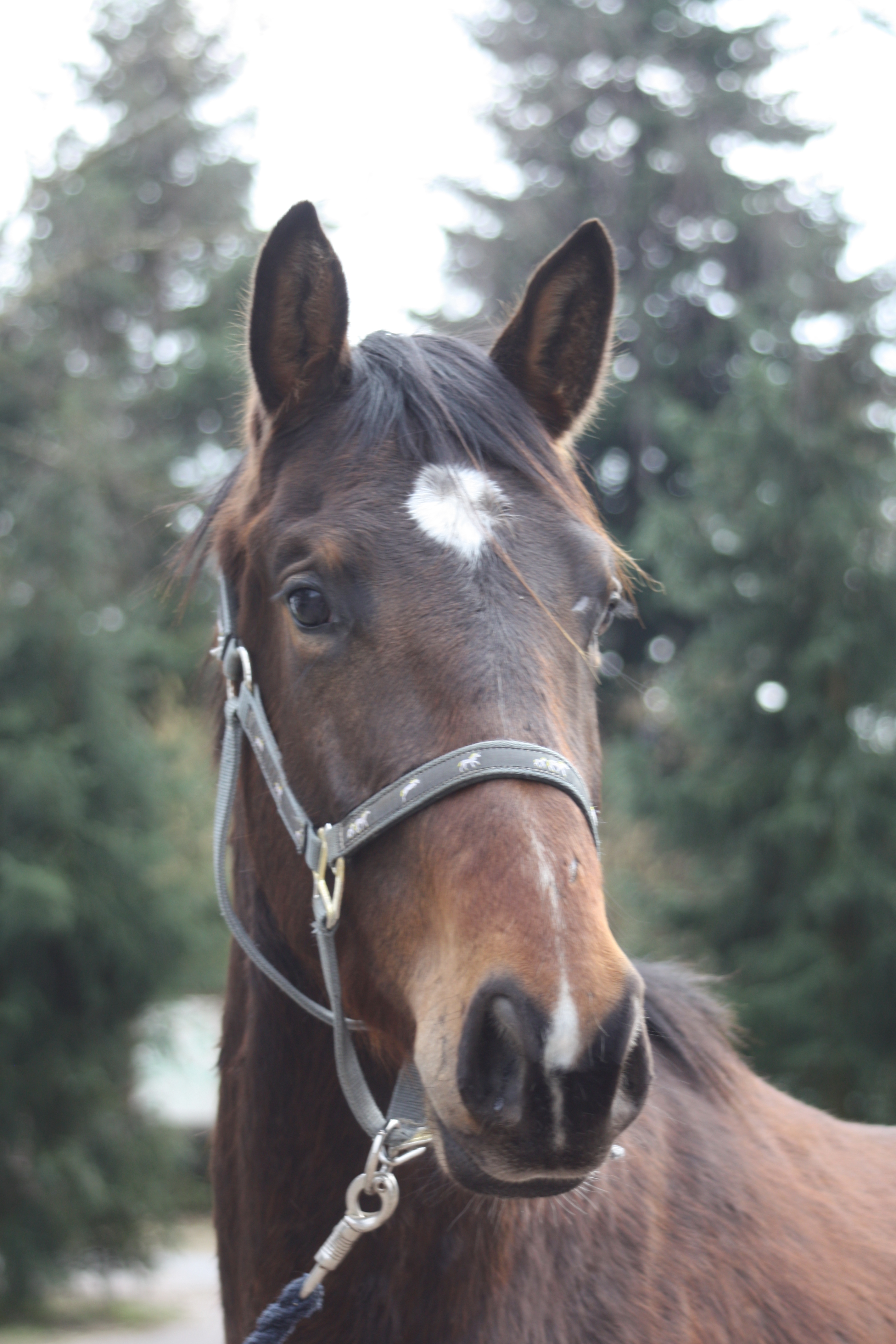 Frühling 2011, Pferde 158